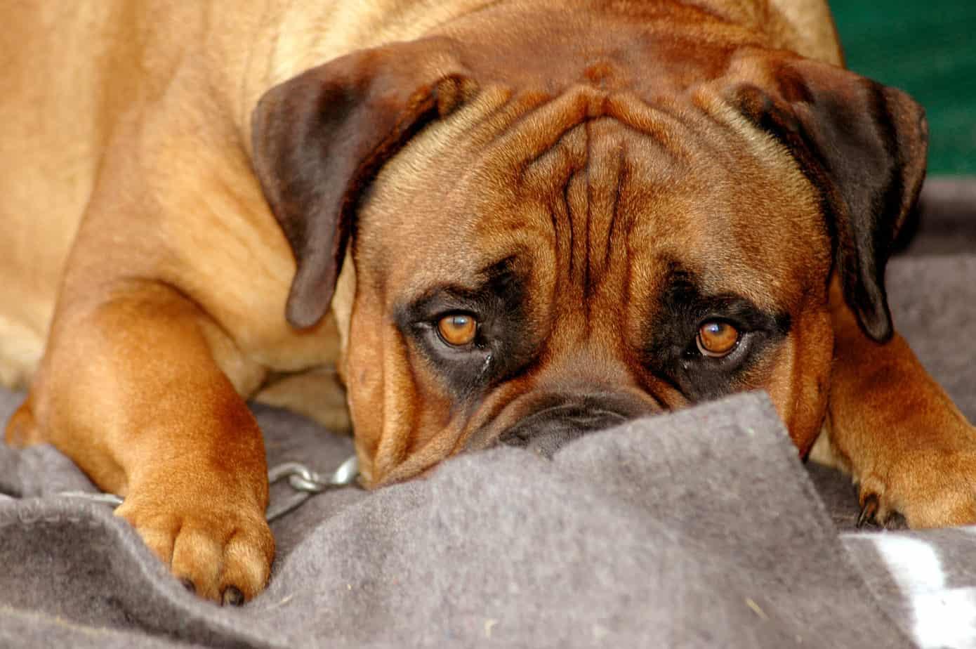 Hvad vil det sige at en hund er sensitiv?